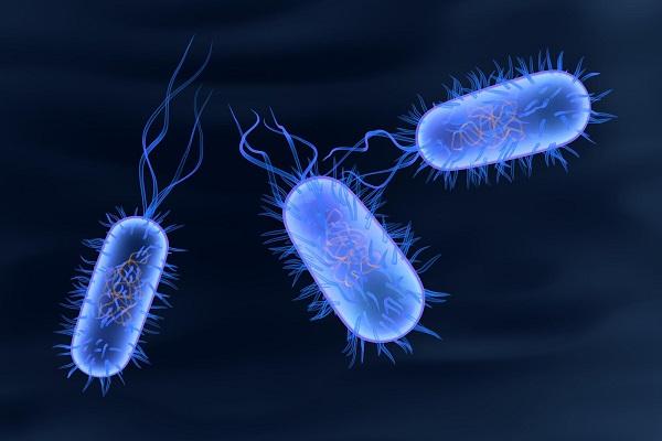 Как сальмонеллез поражает иммунитет?