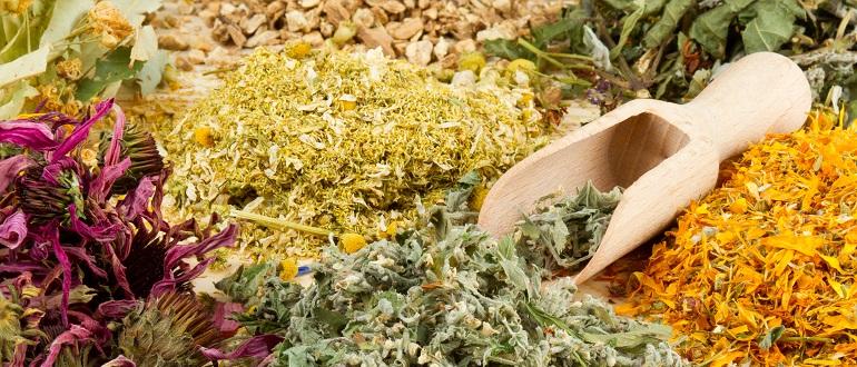 Полезные для иммунитета травы