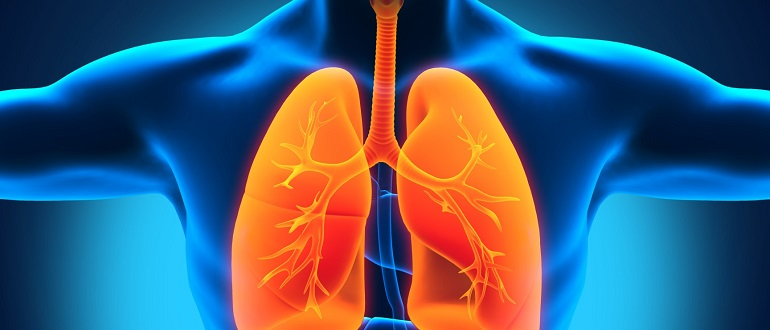 Иммунитет и туберкулез