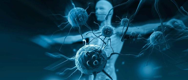 Иммунитет организма