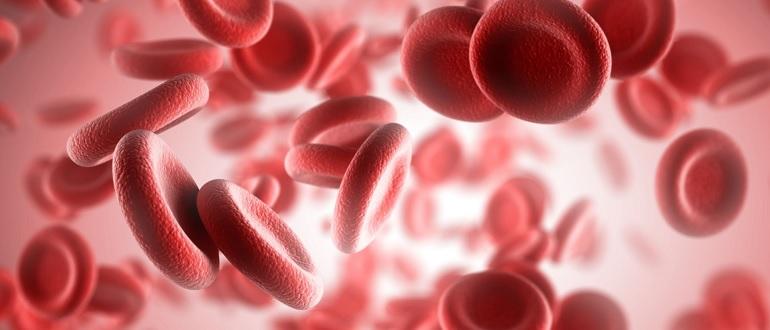 Гемоглобин и иммунитет