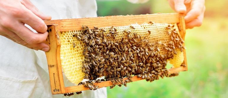 Пчелиная перга для иммунитета