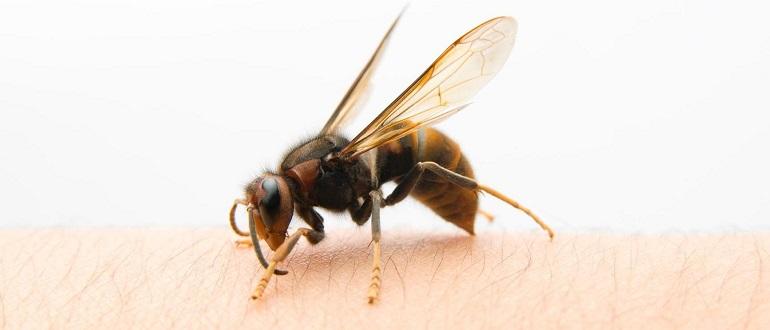 Простатит укусами пчел